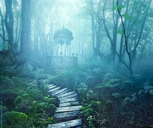 forest, nature, and wonderland image