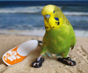 bird and cute image