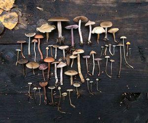 mushroom and fungi image