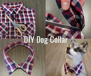 diy and dog image