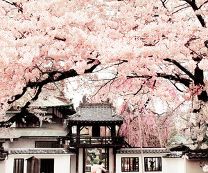 asia, japan, and nature image