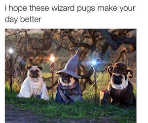 pug and wizard image