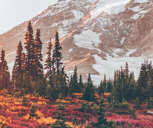autumn, forest, and landscapes image