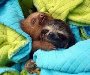 animal, sloth, and cute image
