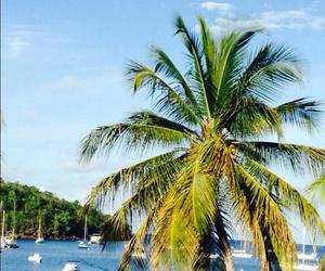 beach, Island, and martinique image