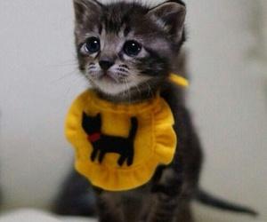 cat, kitten, and animals image
