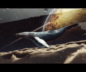 whale, кит, and синийкит image