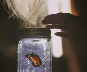 butterfly, grunge, and vintage image