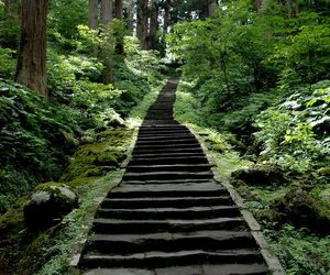 nature, forest, and stairs image