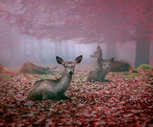 animals, beautiful, and autumn image