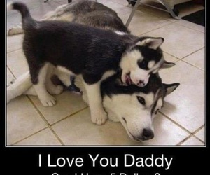 dog, daddy, and funny image