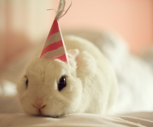 bunny, cute, and birthday image