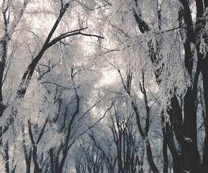snow, snowfall, and trees image