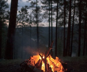 fire, forest, and autumn image