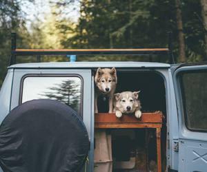 dog, animals, and nature image
