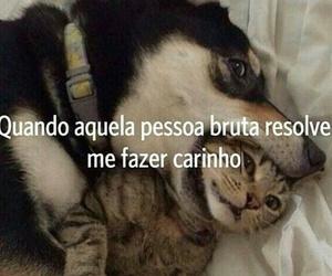 carinho, cavalo, and bruta image