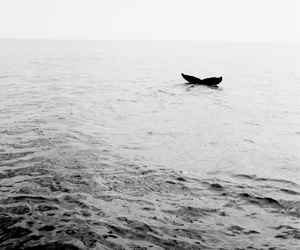 ocean, whale, and black and white image
