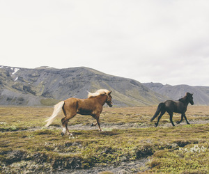 horse, nature, and wild image