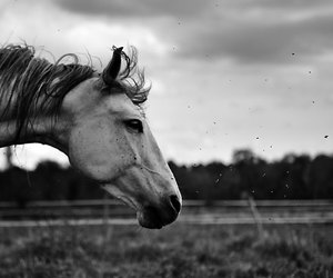 black, horse, and photography image