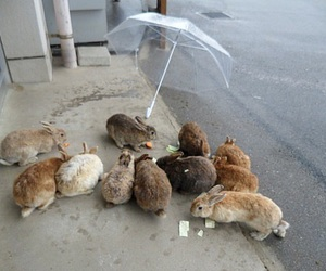 bunny, rabbit, and rain image