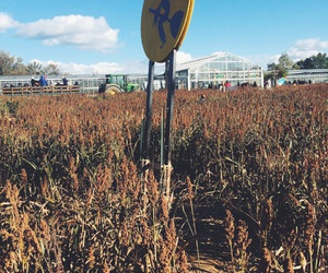 cornfield, fall, and Halloween image