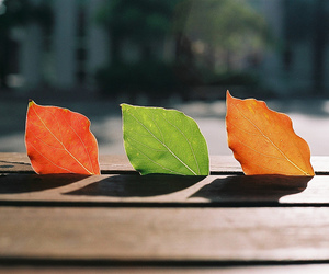 leaves, autumn, and green image