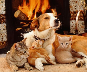 dog, cats, and kitten image