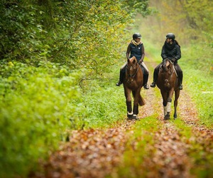 autumn and horses image