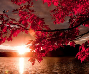 sunset, red, and nature image