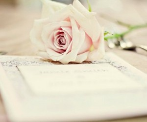 flowers, romantic, and rose image