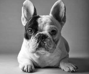 dog, beautiful, and cute image