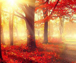autumn, red, and trees image