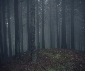 background, foggy, and forest image