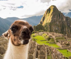 animals, funny, and travel image