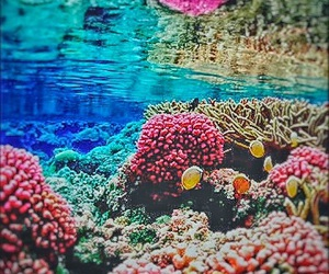 beautiful, clear, and coral reef image