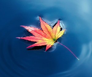 autumn, nature, and water image