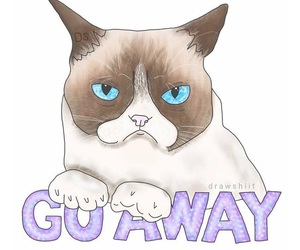 overlay, cat, and go away image