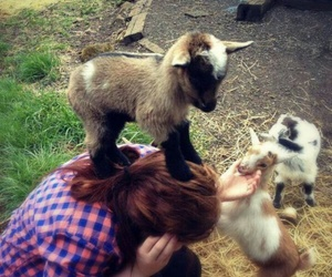 cute, goat, and animal image