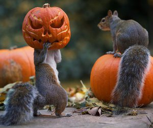 Halloween, squirrel, and pumpkin image