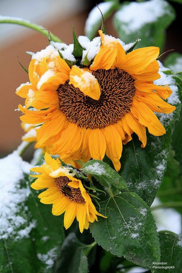 flower, lovely, and snow image