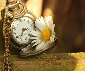 clock, flower, and daisy image