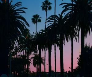 palms and sunset image