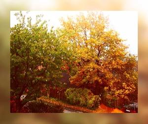 autumn, badass, and boy image