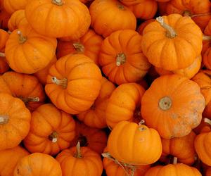 aesthetic, Halloween, and orange image