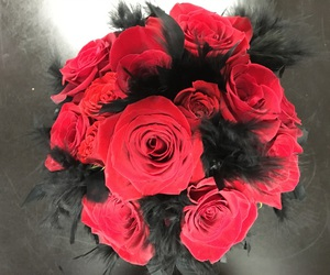 feathers, florist, and red roses image