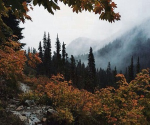 autumn, forest, and nature image
