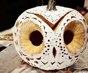 owl, pumpkin, and Halloween image