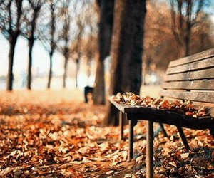 autumn, bench, and color image
