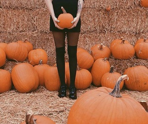pumpkin, autumn, and Halloween image
