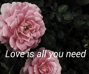 flower, phrases, and quotes image